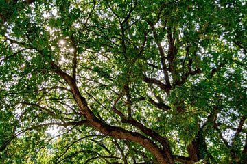 Zon door het bladerdak van Margreet Boersma