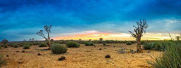 Panorama van de Kalahari woestijn, Namibië van Rietje Bulthuis