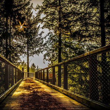 Durch den Wald  van Michael  Kendziorra
