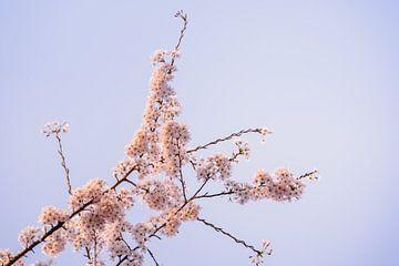 Blüte Baum von Joyce van Galen