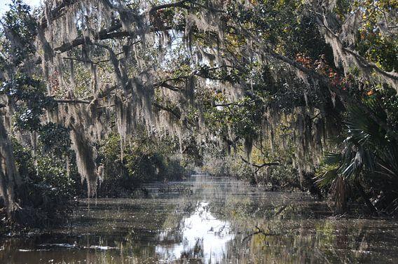 Sumpf und Moos