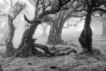 Oude bomen in zwart-wit van