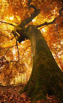 Sous l'arbre sur