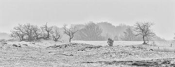 Drunense Duinen 03 von Steven Langewouters