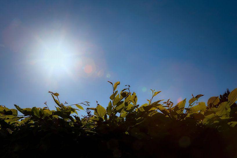 Brandende zon van Jan van der Knaap
