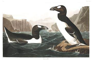 Grand Pingouin