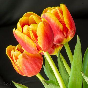 Zeit für den Frühling von Torfinn Johannessen