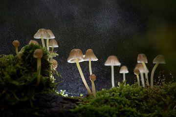 Paddenstoeltjes van Elles Rijsdijk