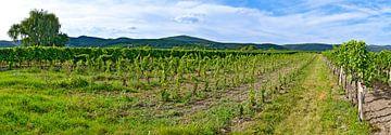Vineyard at Sooss van Leopold Brix
