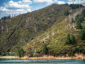 Nieuw-Zeeland - Picton - De buitengewone kustlijn van het Zuidereiland van Rik Pijnenburg