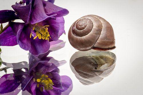 Krul en bloem