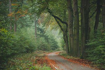 Wandelpad herfst van Nancy van Verseveld