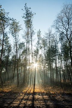 Lichtstralen door de bomen van Manon Verijdt