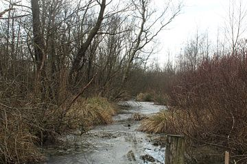 Waterstroom in Nationaal Park De Alde Feanen sur Anne Kernkamp