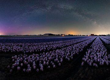 Milchstraßen-Panorama über Blumenfeldern. von Corné Ouwehand