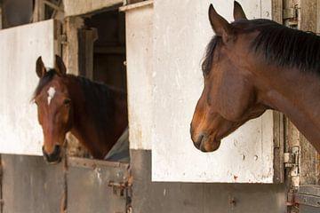 Paarden in de paardenstal van