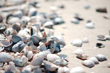 Schelpen op het strand van Wim van der Geest