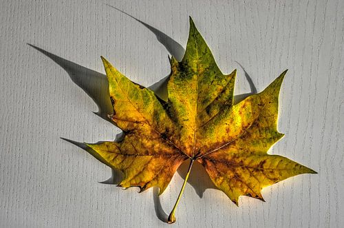 Herfstblad op een witte tafel van