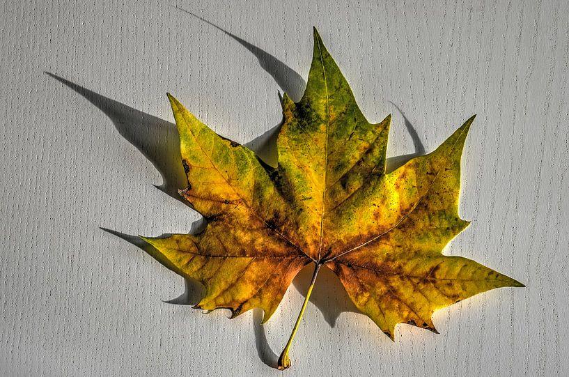 Herfstblad op een witte tafel van Frans Blok