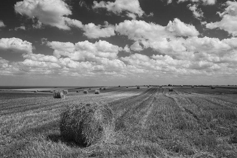Hay bale in cornfield van Ilya Korzelius