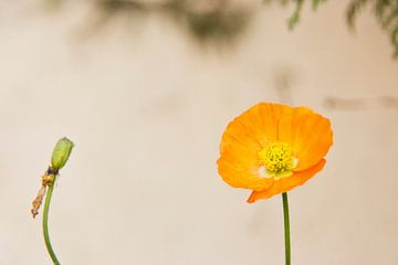 oranje van Elisabeth De Potter