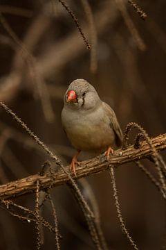 Vogeltje in de vegetatie I van Geke Woudstra