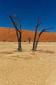 Sossusvlei Namibië (6) van Adelheid Smitt
