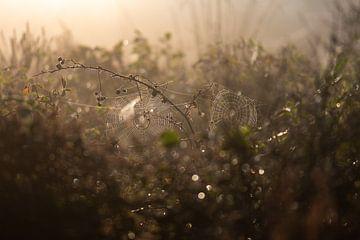 Spinnweben auf dem Heidefeld von Tania Perneel