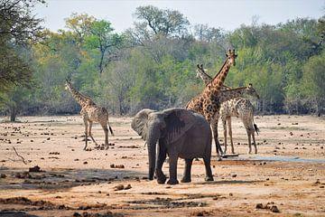 Elefanten und Giraffen in Südafrika von Wouter van der Ent