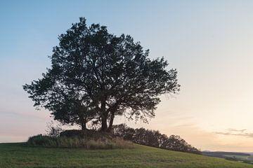 Der Baum des Lebens von wukasz.p