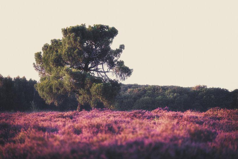 Heide in bloei van Maikel Brands