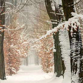 Winter 2021 van Lars van de Goor