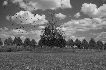 Bomen van Jose Lok