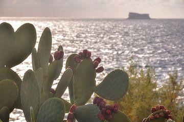 Cactus pour la mer Méditerranée sur Sander Hekkema