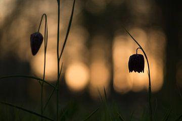 Kievitsbloemen von Elles Rijsdijk