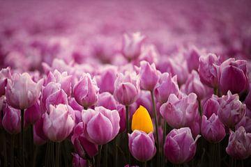 Kleurrijk tulpenveld van Dirk-Jan Steehouwer