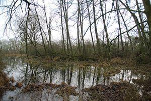 Bomen weerspiegeling in het water langs de Lek