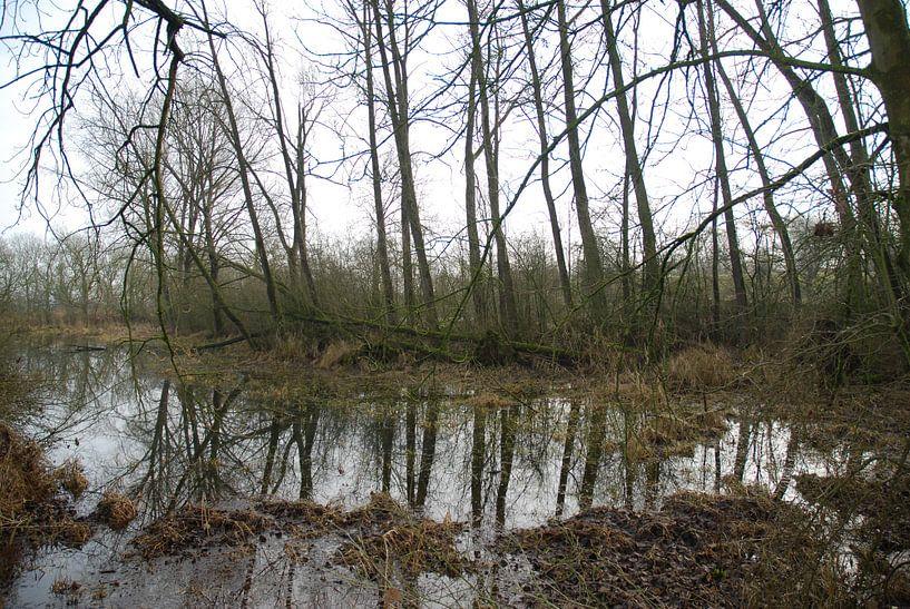 Bomen weerspiegeling in het water langs de Lek von Ingrid Van Maurik