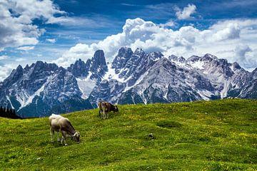 Dolomites - Monte Cristallo sur Reiner Würz / RWFotoArt