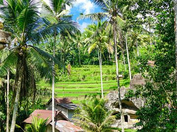 Het landschap bij de Kunung Kawi tempel van Petra Brouwer