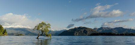 Lonely Tree, Lake Wanaka