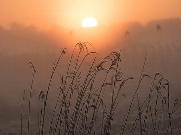 Sonnenaufgang im Polder von Karen de Geus