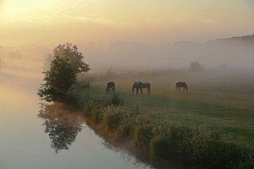 Ruhrweide in de ochtend