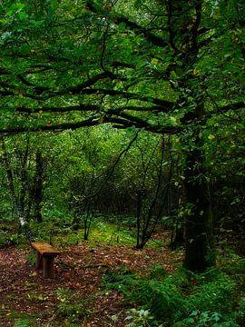 Romantischer Wanderweg in den Laubwäldern von Louis Kreuk