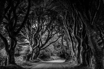 Dark Hedges von Jeroen Linnenkamp