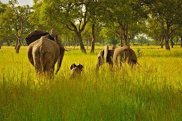 Olifantenfamilie van Anne Hermans