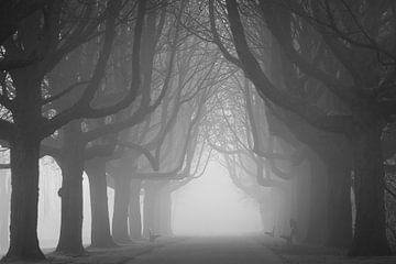 Allee mit Bäumen von Dennis Claessens