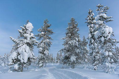 een pad onder de sneeuw. bomen langs de weg.