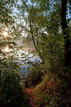Morgendämmerung auf dem See. Eine helle Sonne scheint durch das Laub der Küstenbäume von Michael Semenov