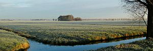 kou in de polder van